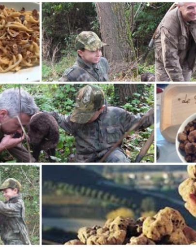 Truffle hunting Siena countryside
